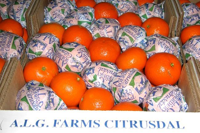 ALG-Farms-Citrusdal